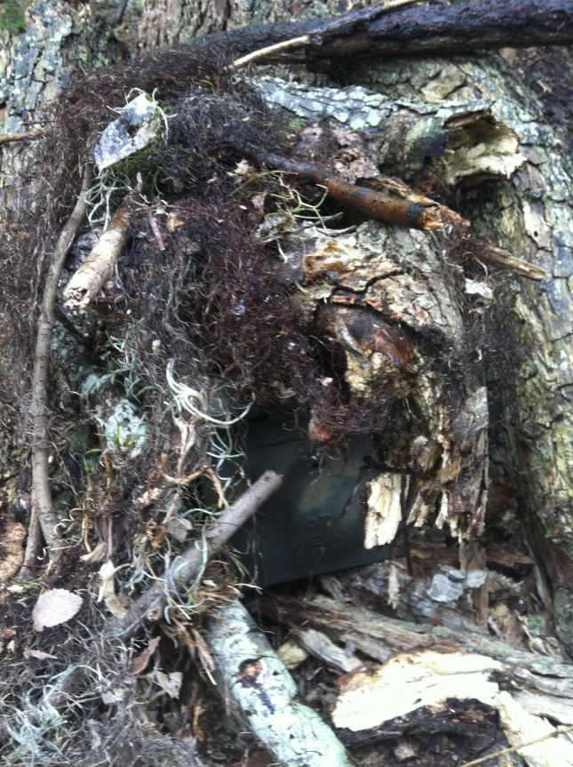 Can you see the Ammo Can hidden in the brush?!
